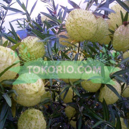 Bunga Potong Jenis Balonan