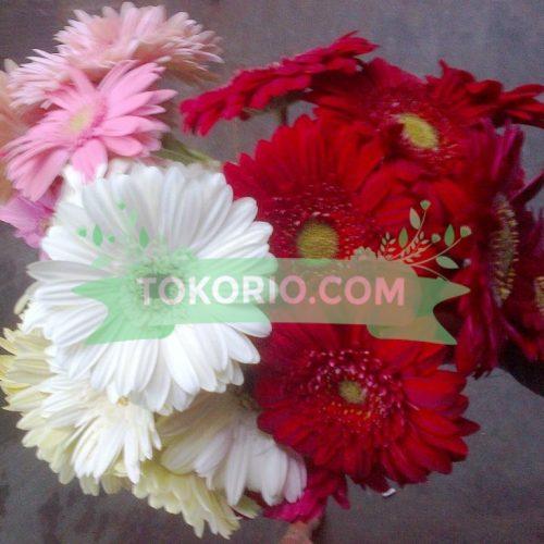 Bunga Potong Jenis Garbera