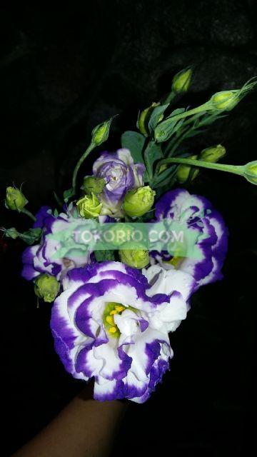 Lisiantus, Bunga Potong, Remix Ungu Putih