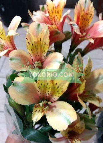 Alstromeria, Bunga Potong