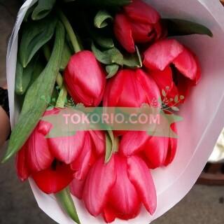 bunga segar, tulip, impor