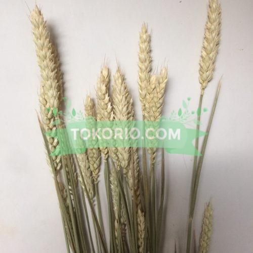 bunga kering, gandum