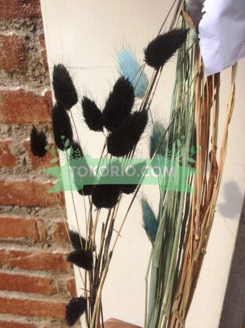 lagurus, bunga kering