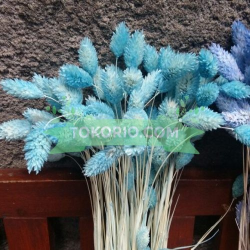 bunga kering, tokorio.com